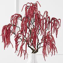 Amaranthus Spray - Set of 3