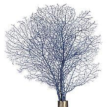 Faux Coral Fan Stem - Set of 3