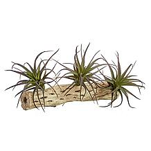 Faux Mini Air Plant - Set of 3