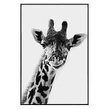 Exotic Animals 4
