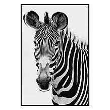 Exotic Animals 1