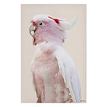 Pink Exotic Feathers