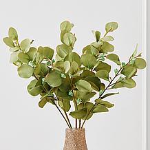 Eucalyptus Spray - Set of 3